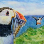 the days catch atlantic puffins